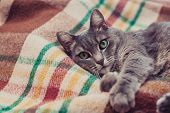 Lazy Cat Relaxing On Soft Blanket. Pets, Lifestyle, Cozy Autumn Or Winter Weekend, Cold Weather Conc poster