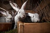 pic of rabbit hutch  - Young rabbits popping out of a hutch  - JPG