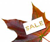 Autumn Maple-leaf And White Price Card With Word Sale Composed Of Autumnal Maple Leaves. Isolated On poster