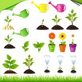 image of flower pots  - Sprouts - JPG