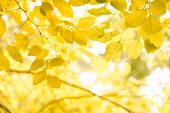 Nature Green And Yellow Leafs In Summer With White Background poster