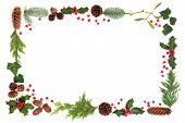 Winter and Christmas natural flora background border with holly and loose berries, leaf sprigs, acor poster