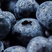 Blueberries background from natural organic freshly picked fruits. Close-up of ripe fresh blueberrie poster