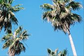 Palm Trees Against The Sky poster