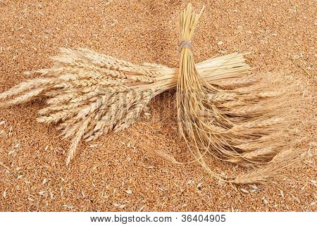 Sheaves of wheat on the background of wheat grains