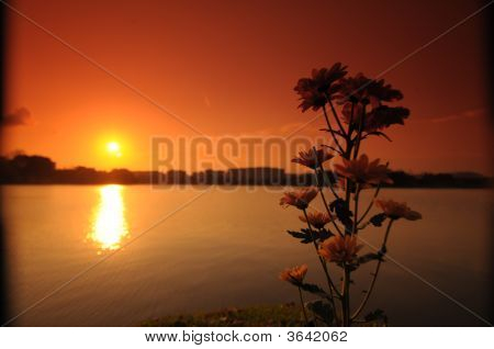 Sunset, Lake And Flower In The Parks