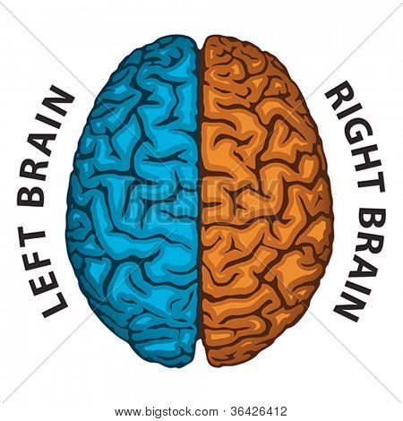 Left Brain, Right Brain. Human brain hemispheres. Vector format EPS 8, CMYK.