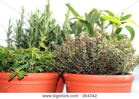 Mixed_herbs2