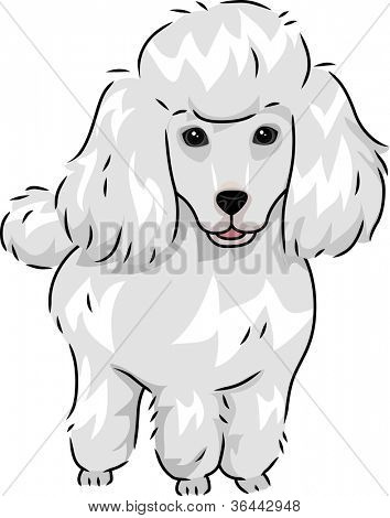 Illustration Featuring a Cute and Furry Poodle