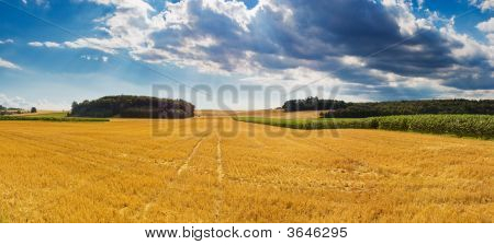 Harvest Time Panorama