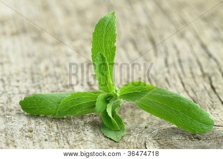Stevia Rebaudiana plant on wooden background