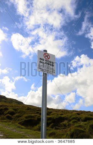 Não são permitidos nas colinas de cães