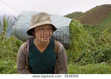 Hmong Transports Vegetables To The Valley