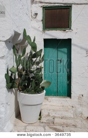 Door With Giant Cactus Pot
