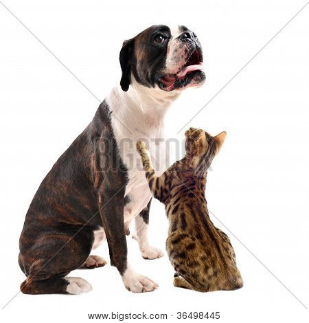 Brown Bower And Bengal Cat