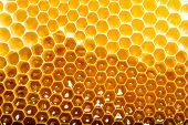 foto of honeycomb  - unfinished honey making in honeycombs - JPG