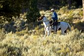 picture of buckaroo  - Cowboy on a Paint Horse in Early Morning Light  - JPG