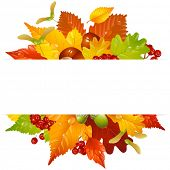 Vector autumn frame with fall leaf, chestnut, acorn and ashberry