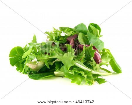 Salad Rucola, Frisee, Radicchio, Lamb's Lettuce