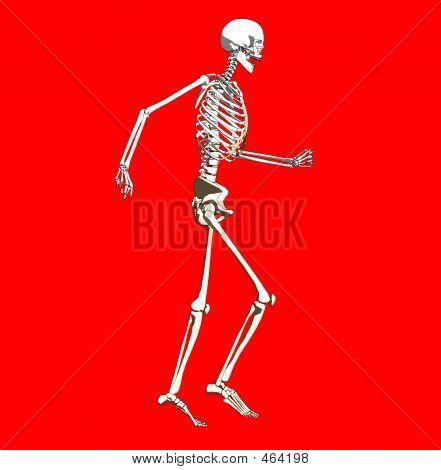 Bone 255