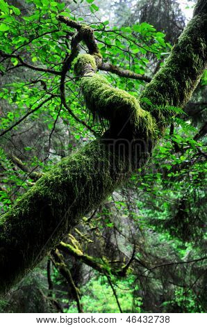 Moss cover tree