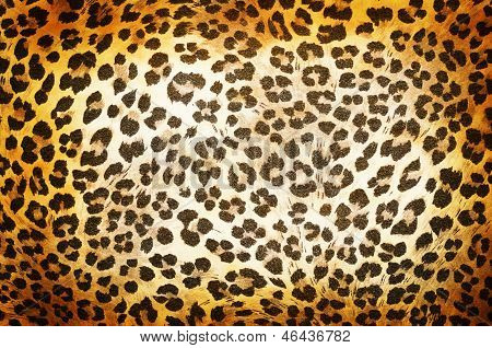 Cheetah patroon