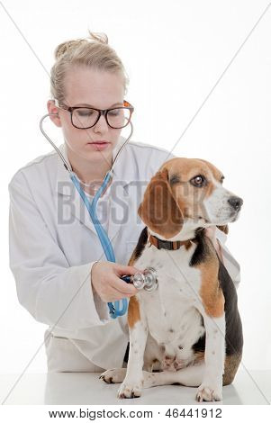 veterinarian or vet examining pet dog
