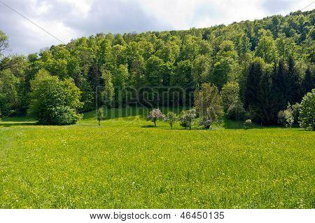 Beautiful Landscape In Spring