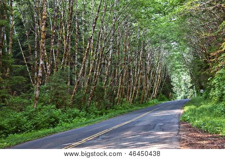 Quiet Country Road Through Forest
