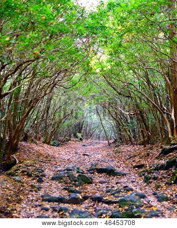 Tunnel trail at Aokigahara Forest in Japan. The forest has historic associations with demons in Japanese mythology and is unfortunately a popular place for suicides.