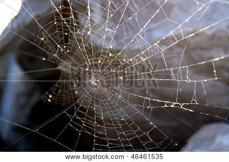 Some Spider Net Back Illuminated