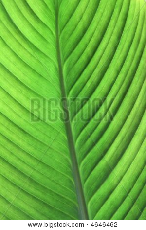 Backlite Green Leaf.