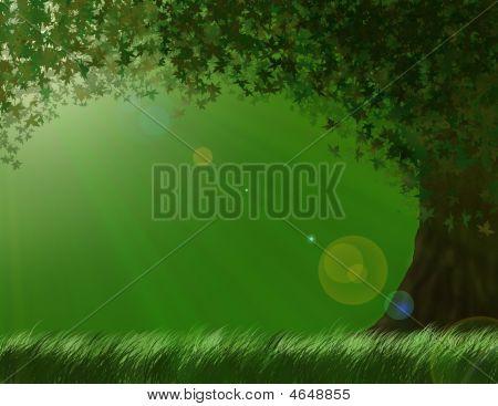 Mysterious Sunny Tree
