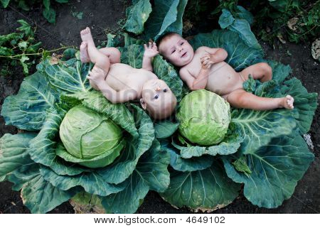 Little Boys Playing At The Vegetable Garden