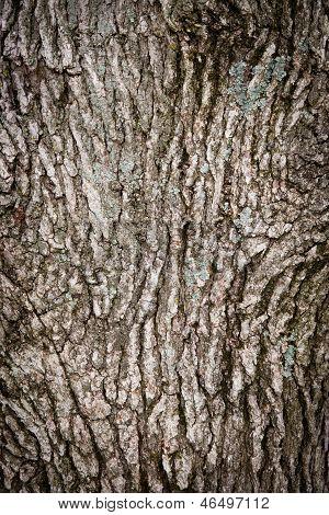 Oak Tree Bark Background