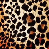 stock photo of cheetah  - Cheetah pattern  - JPG