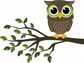 picture of owl eyes  - little cute owl sitting on a branch isolated on white background - JPG