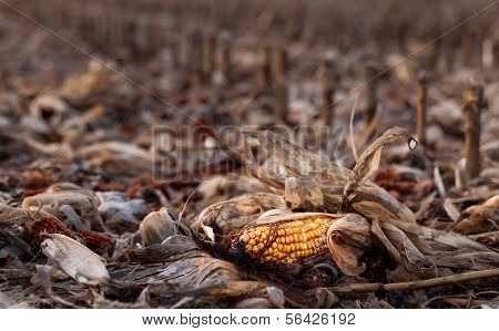 The End Of Corn