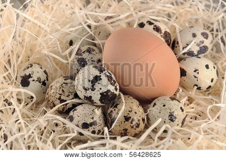 Big And Small Eggs