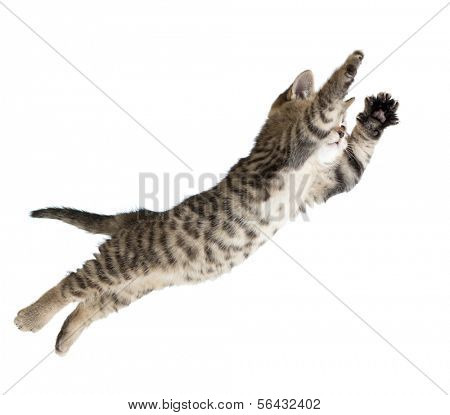 Flying or jumping kitten cat isolated on white