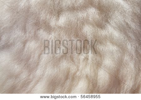 Sheepskin Background