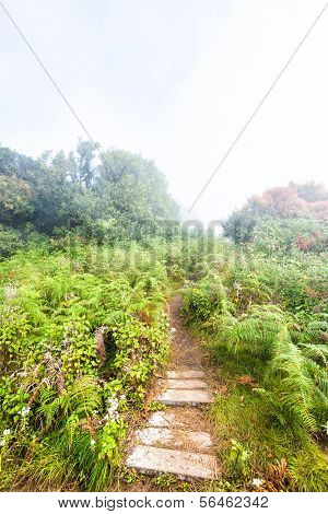 Pathway In Field On Mountain