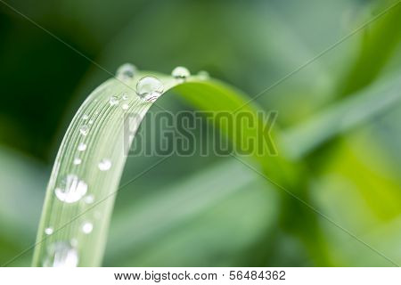 Dewdrops Or Raindrops On A Green Leaf