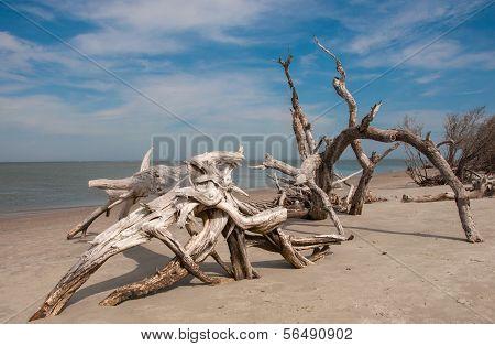 Driftwood On Folly Beach