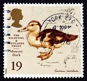 Postage Stamp Gb 1996 Muscovy Duck, Painting