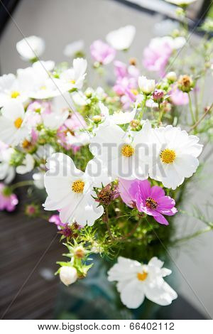 Pink And White Daisy Flowers