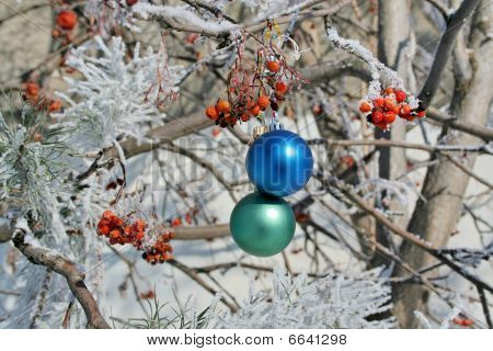 Two Balls On Rowanberrys Tree
