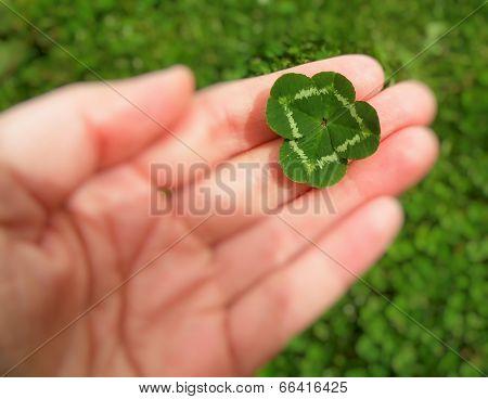 Quarterfoil In Hand