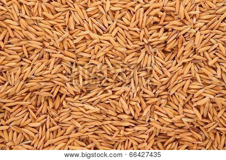 Pile raw of dry paddy grain unmilled rice.