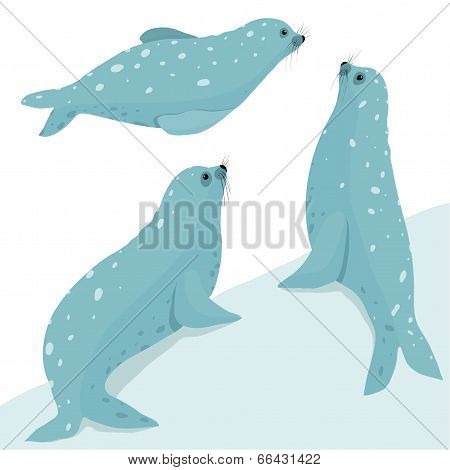 Fur Seal Wildlife Illustration Set